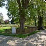 Schöne, alte Bäume
